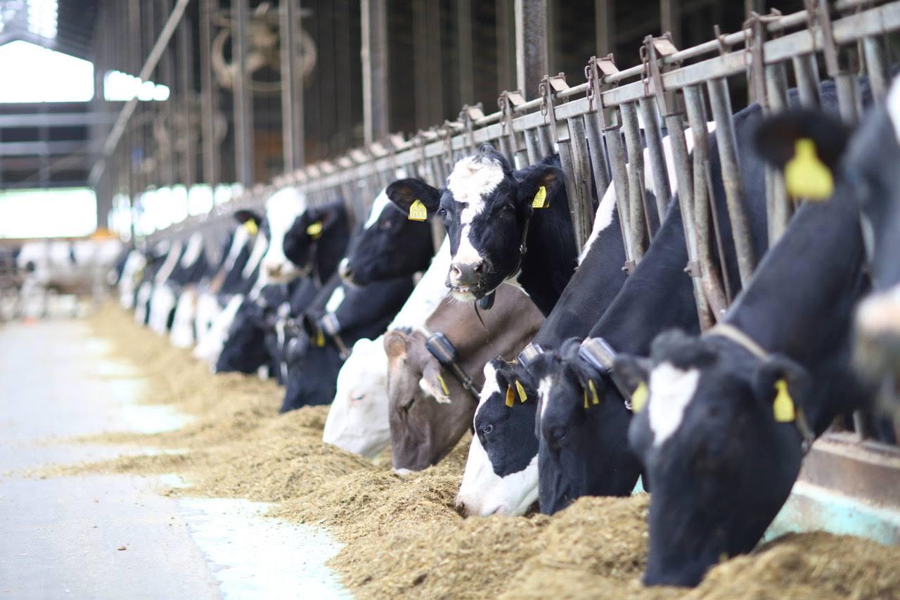 人と牛が親密な中標津で、「牛」がテーマのゲストハウスに滞在